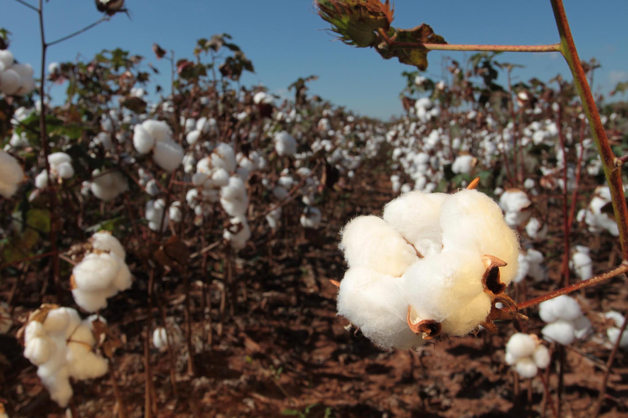 Cotton farm in Brazil